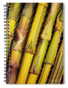 Bamboo Stalks Spiral Notebook