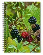 Berries In Vicente Perez Rosales National Park Near Puerto Montt-chile  Spiral Notebook