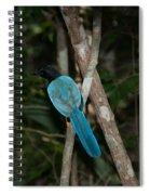 Birds From Coba Spiral Notebook