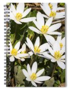 Bloodroot Flowers 2 Spiral Notebook