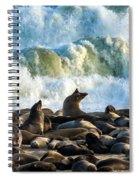Cape Fur Seals Arctocephalus Pusillus Spiral Notebook
