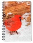 #2 Cardinal In Snow Spiral Notebook