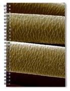Caribou Hair Spiral Notebook