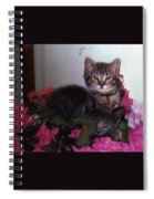 2 Cats In The Flowers Spiral Notebook