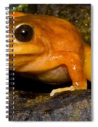 Chilean Tomato Frog Spiral Notebook