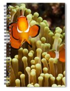 Clown Anemonefish Spiral Notebook