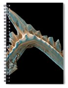 Conodont Tooth, Sem Spiral Notebook