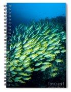Coral Reef Scene Spiral Notebook
