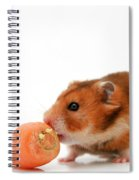 Curious Hamster Spiral Notebook