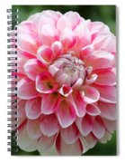 Dahlia Named Hawaii Spiral Notebook
