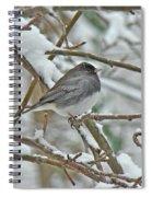 Dark-eyed Junco - Snowbird Spiral Notebook