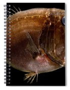 Deep Sea Fangtooth Spiral Notebook