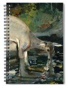 Deer Drinking Spiral Notebook