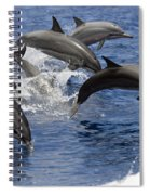 Dolphins Leaping Spiral Notebook