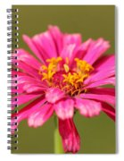 Fuchsia Pink Zinnia From The Whirlygig Mix Spiral Notebook