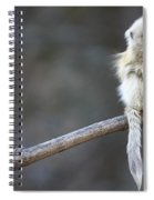 Golden Snub-nosed Monkey Rhinopithecus Spiral Notebook