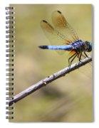 Golden Wings Spiral Notebook