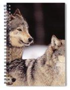 Gray Wolves Spiral Notebook