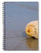 Harp Shell On Beach Spiral Notebook