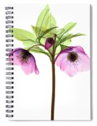Hellebore Flowers, X-ray Spiral Notebook