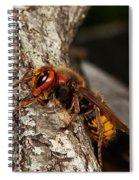 Hornet Vespa Crabo Spiral Notebook