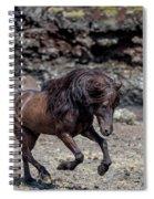 Icelandic Black Stallion, Iceland Spiral Notebook