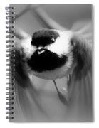 Img_0001 - Carolina Chickadee Spiral Notebook
