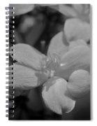 Jatropha Blossoms Painted Bw Spiral Notebook
