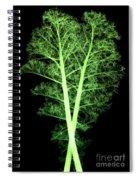 Kale, Brassica Oleracea, X-ray Spiral Notebook
