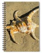 Lambis Arthritica Spider Conch Spiral Notebook