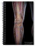 Leg Blood Supply Spiral Notebook