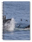 Lunge-feeding Humpback Whales Spiral Notebook