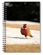 Male Ring-necked Pheasant Spiral Notebook