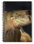 Mobile Logperch Percina Kathae Spiral Notebook