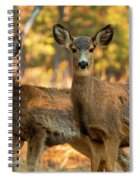 Mule Deer In The Woods Spiral Notebook