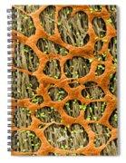Myenteric Plexus, Sem Spiral Notebook