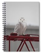 Snowy Owl 9470 Spiral Notebook