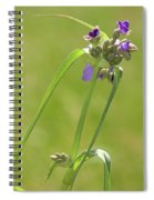 Ohio Spiderwort Spiral Notebook