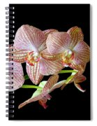 Orchid Phalaenopsis Flower Spiral Notebook