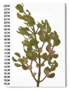 Pacific Mistletoe Spiral Notebook