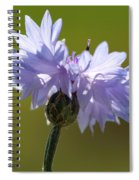 Pale Blue Bachelor Button From The Double Ball Mix Spiral Notebook