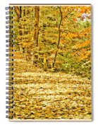 Path Through A Pennsylvania Deciduous Forest Autumn Spiral Notebook