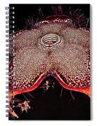 Persian Carpet Flower Spiral Notebook