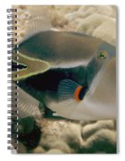 Picasso Triggerfish Spiral Notebook