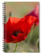Poppies In Field In Spring Spiral Notebook