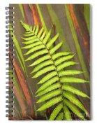 Rainbow Eucalyptus And Fern Spiral Notebook