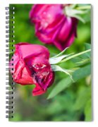 Red Rose Bud Spiral Notebook