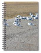 Ring Billed Gulls  Spiral Notebook