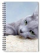 Russian Blue Cat Spiral Notebook