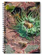 Sea Anemones Spiral Notebook